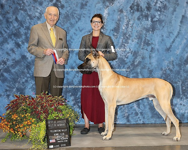 Yellowstone Valley Kennel Club 1  Wednesday June 19, 2019