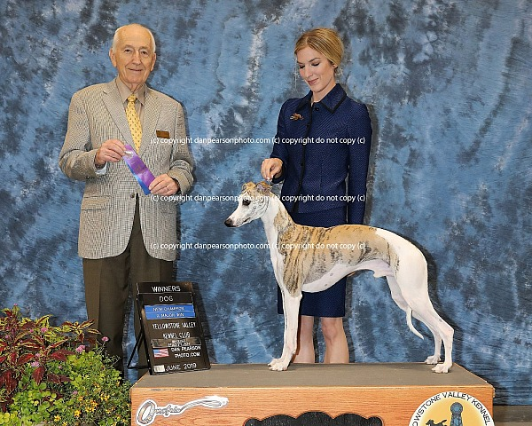 Yellowstone Valley Kennel Club 2 Thursday June 20, 2019