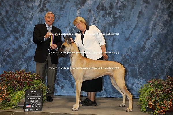 Yellowstone Valley Kennel Club 4 Saturday June 22, 2019